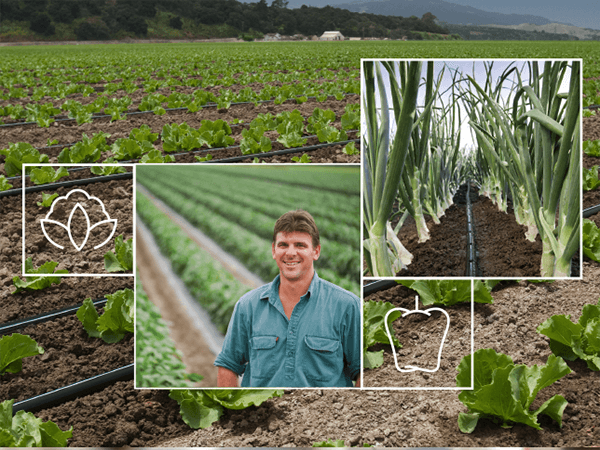 Open Field Vegetable Irrigation Solutions